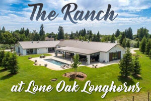 The Ranch at Lone Oak Longhorns